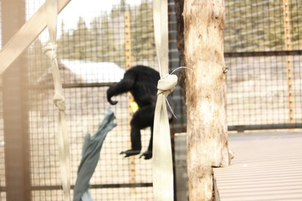 3-26-09-missy-jump-2