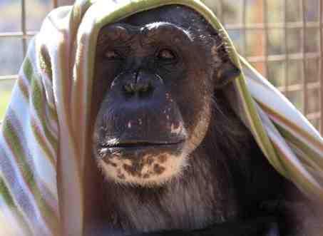web_negra-with-blanket-on-head_mg_2098-copy