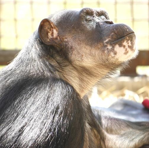 Negra in the sun photo