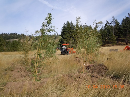 ken planting bamboo