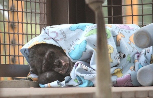 Missy under blanket