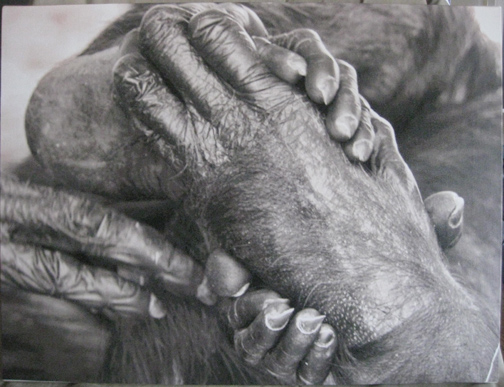 photo of hands and feet