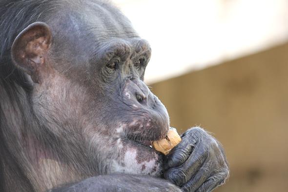 negra eat walnut