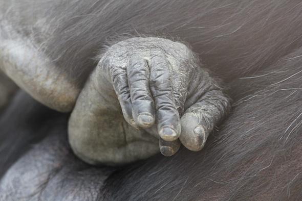 Foxie toe-rubbing