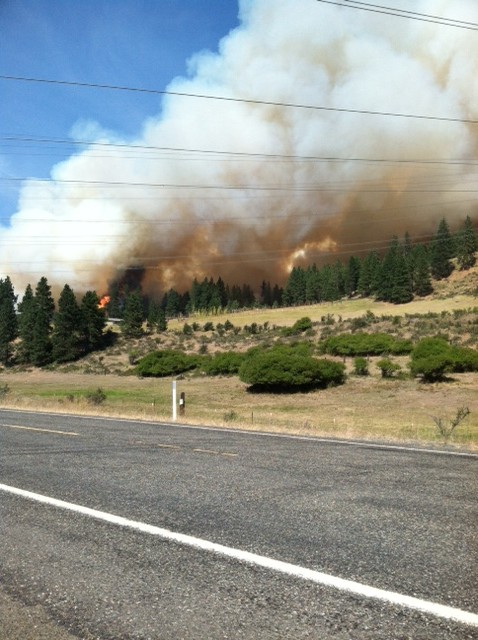 fire on hil above chimp house from highway