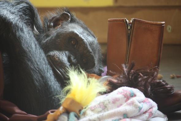 web jamie close up lay in nest sheet blanket troll boot dora enrichment pr IMG_0724