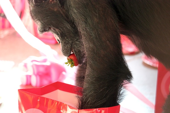 web Foxie strawberry in mouth gift bag forage valentines day party PR IMG_3310