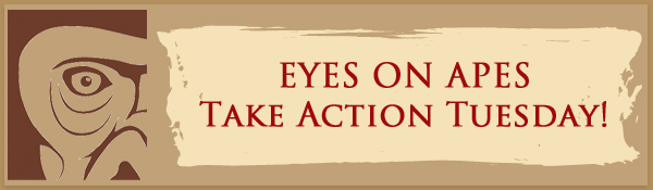 Take Action Tuesday banner