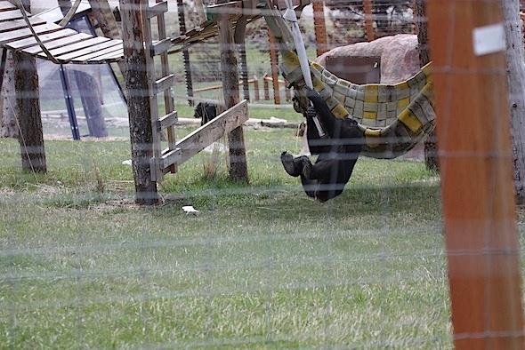 web Missy swing fire hose YH 1 IMG_1544