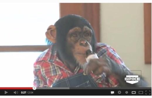 """Chimpanzee """"actor"""" on the premiere episode of Urban Tarzan"""