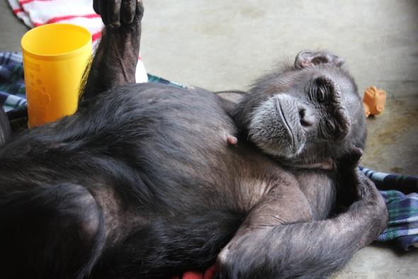 web Jody lie on back blanket nest playroom PR IMG_6871
