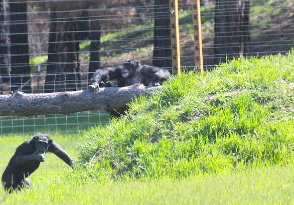 web Annie Burrito green grass mound climb log bridge Young's Hill YH IMG_7269