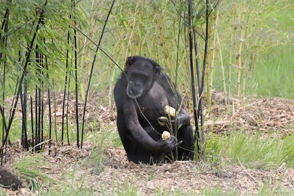 web Jody bite black bamboo YH IMG_8405