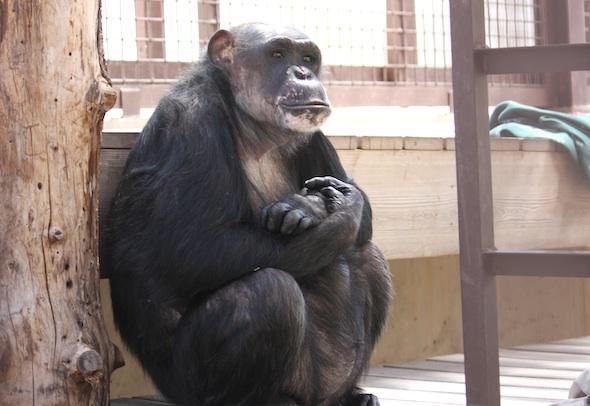 Negra sit on platform arms crossed