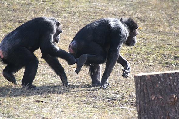 web Missy grab annie foot play chase YH stump IMG_2640