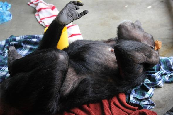 web Jody lie on back stretch blanket nest playroom PR IMG_6884