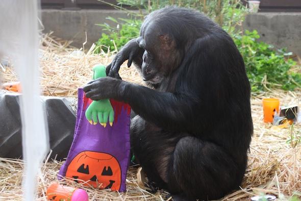 web_Negra_sit_in_straw_inspect_gift_bag_birthday_halloween_enrichment_GH_dg_IMG_5630