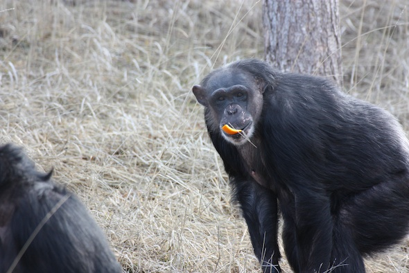 web_Negra_YH_orange_in_mouth_(jb)_IMG_7787
