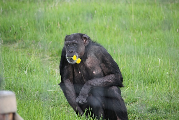 web_Jody_sit_flowers_in_mouth_green_grass_YH_ek_IMG_9135