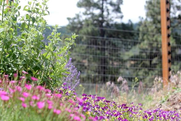 web_garden_flowers_kd_IMG_0708