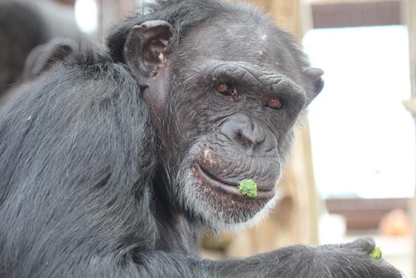 Jamie eating broccoli floret