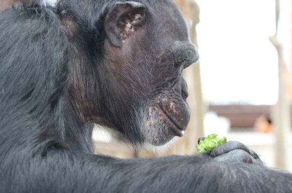 Jamie with broccoli