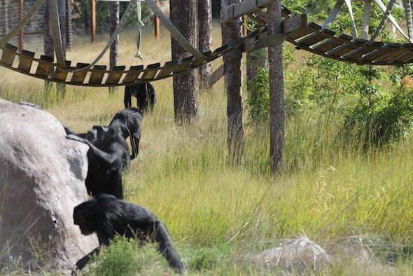 web_Four_chimps_YH_jb_IMG_3044