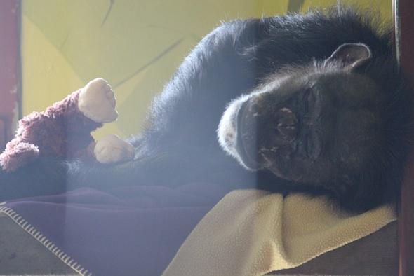 web_Negra_nap_catwalk_stuffed_monkey_PR_ls_IMG_2790