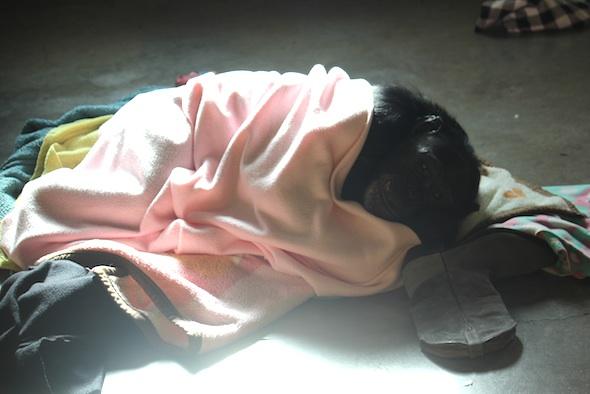 web_Jamie_lie_cuddle_in_blanket_nest_boot_enrichment_PR_ek_IMG_5174