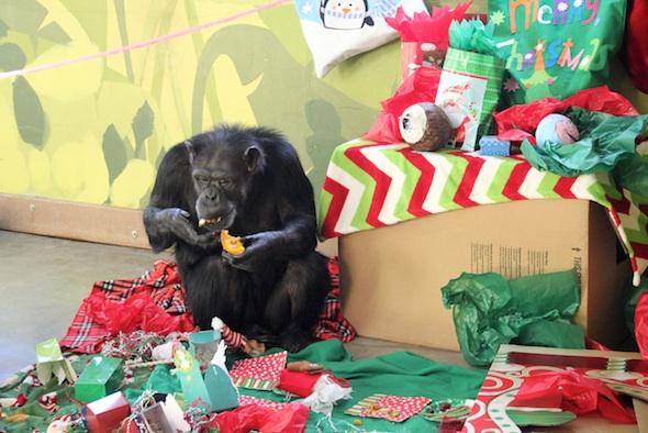 web_annie_eat_forage_christmas_party_pr_dm_IMG_7675