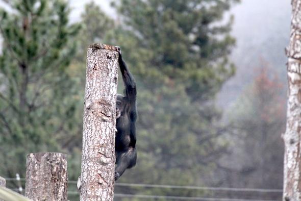 Missy climb down post