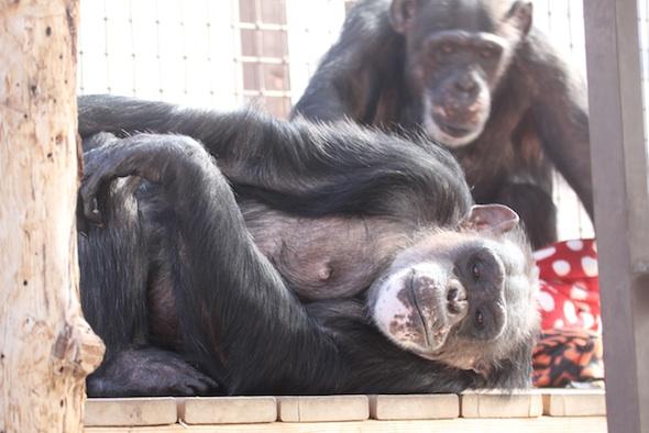 negra lying on deck