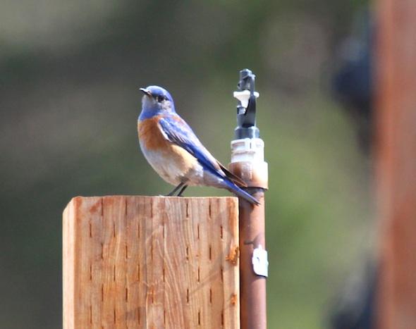 web_bluebird_look_camera_post_kd_IMG_5633