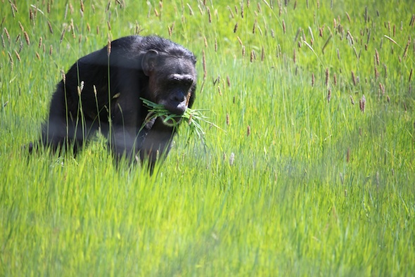 web_jody_carry_grass_in_mouth_yh_dm_IMG_2779