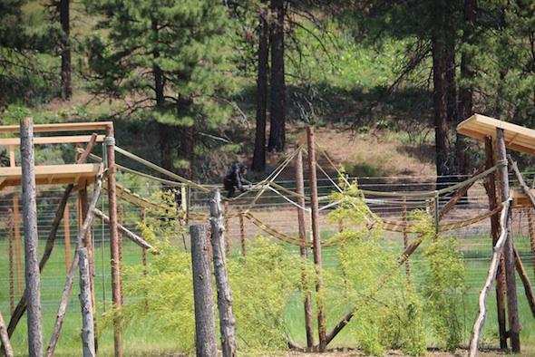 web_missy_walk_tightrope_new_bridge_jb_IMG_3284