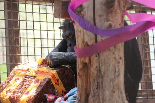 Annie treasure chest piñata