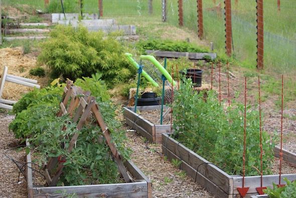 web_Garden_plants_kh_IMG_4349