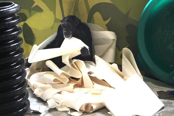 Jamie's paper nest