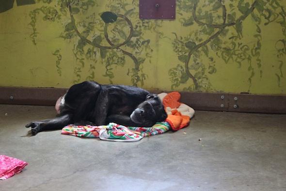 web_Jody_lie_down_blanket_nest_floor_hot_day_PR_kh_IMG_3764