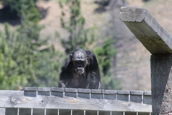 Negra on top of platform