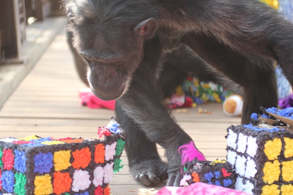 web_Foxie_inspect_rubik's_cube_pinata_birthday_party_GH_ek_IMG_3955