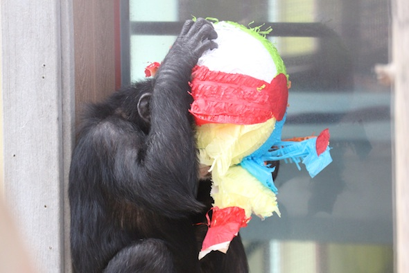 Missy with her head in a pinata