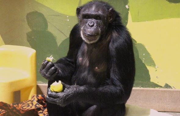 Jamie eating pear