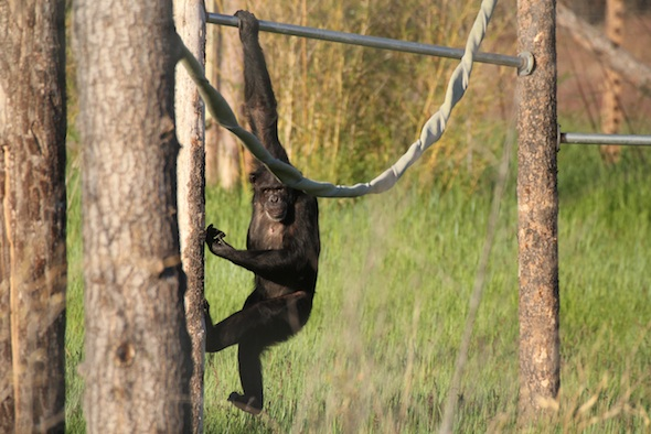 Jamie hanging from metal pole