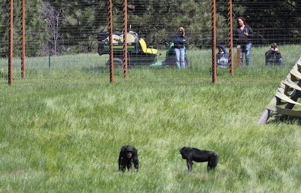 web2_Bill_Nikki_Walters_Dave_chimps_foreground_TWISTER_IMG_2305