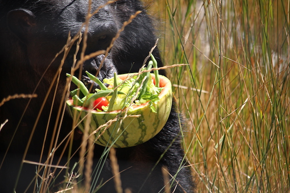 web_negra_carry_watermelon_bowl_in_mouth_closeup_yh_aw_IMG_6405