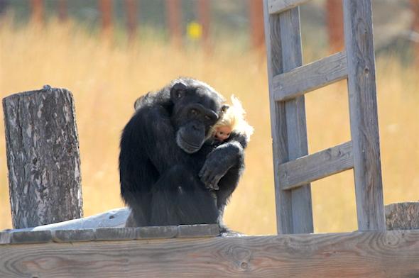 Foxie hugging blonde dora
