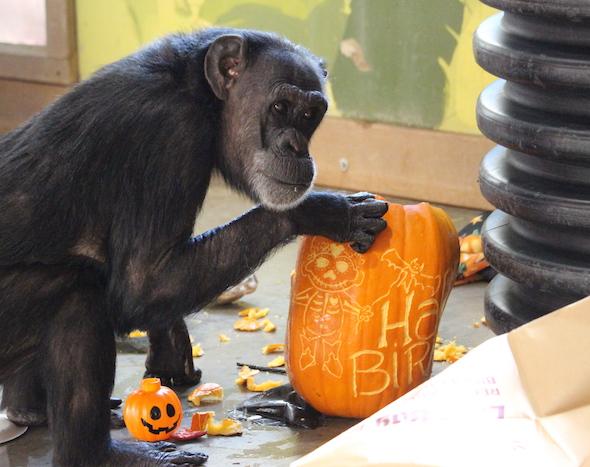 web_jody_squat_pumpkin_look_at_camera_halloween_birthday_party_pr_kh_img_9150-copy