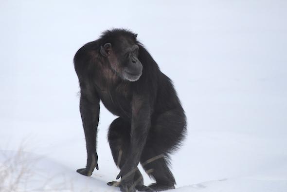 annie standing on snow
