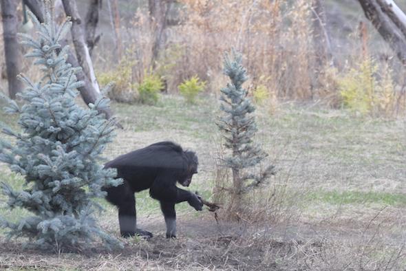 jamie inspecting trees
